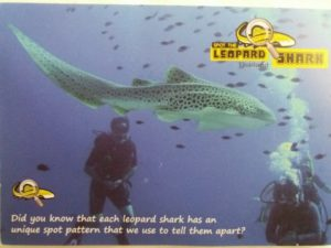 photo to encourage people to upload and send photos of leopard sharks for identification
