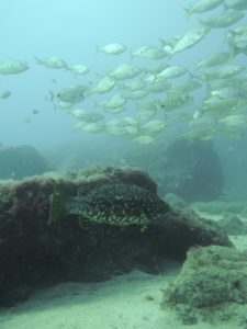 Diving Arinaga, Gran Canaria