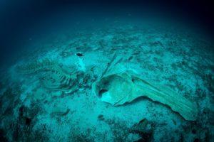 Koh Haa whale skeleton